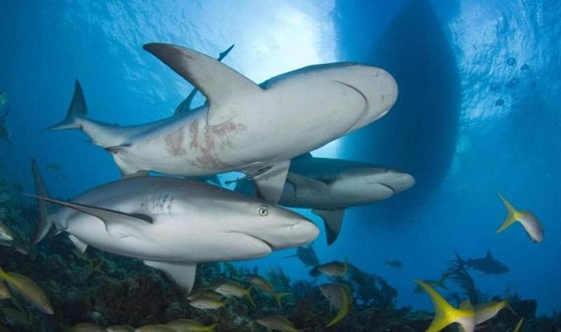 Scuba Diving Exuma